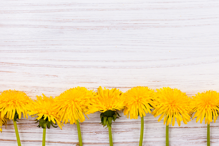 dandelions on a white painted Board background Imagens
