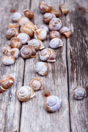 Hermaphrodite: many brown spiral shells on a wooden board decorative macro detailed photo