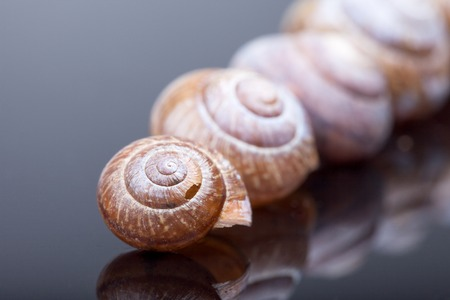 Hermaphrodite: the number of empty spiral shell on black background