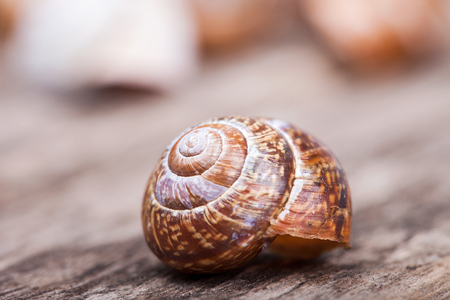 Hermaphrodite: abstract macro photo of a spiral snail on a wooden surface