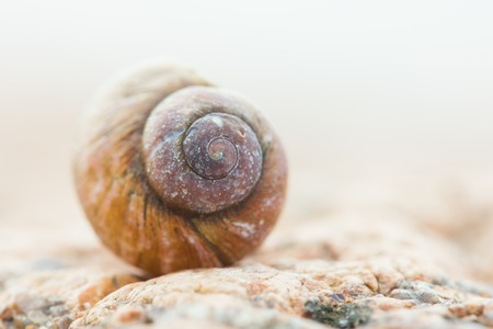 empty spiral shell snail helix close up Stock Photo