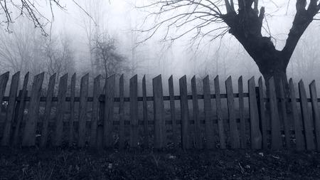 Opuštěné Hrůza scéna Misty lesa Reklamní fotografie