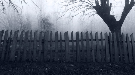 Abandoned Horror scene of the Misty Forest Standard-Bild