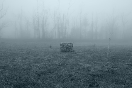 Stone Well in the Misty Forest Standard-Bild