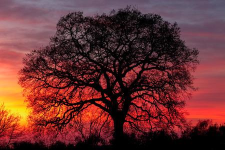 impressive: Huge tree over sunset sky