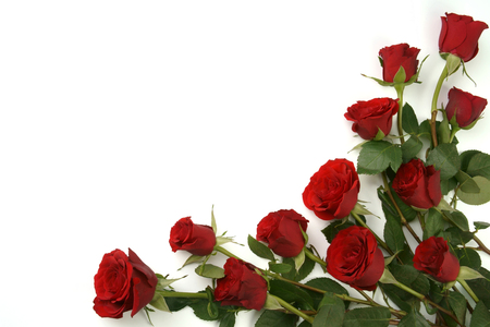 Roses rouges fond