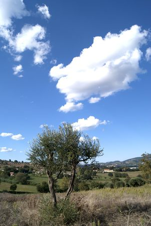Rural view is the lonely tree against the background of the sky photo