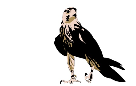 Black bird predator aggressive hawk Illustration