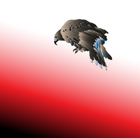 Black big bird predator aggressive hawk Stock Photo - 9227699