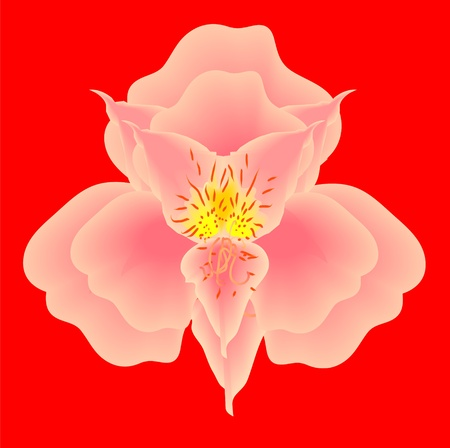 mesh orchid pink against the red background Vector