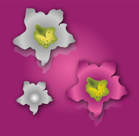 Collection mesh of flowers orchids pink and violet Vector