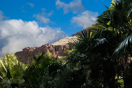 Picturesque view mountain tropical vegetation summer Stock Photo - 11667388