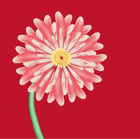 pink flower is aster against red background photo