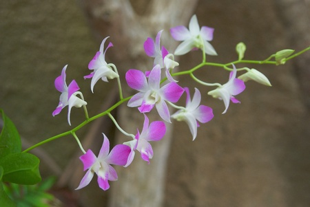 Orchid is tender violet on green leaves  photo