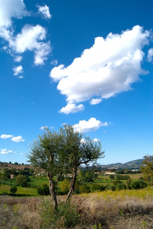 Lonely tree against the blue sky Italy Stock Photo - 13621366
