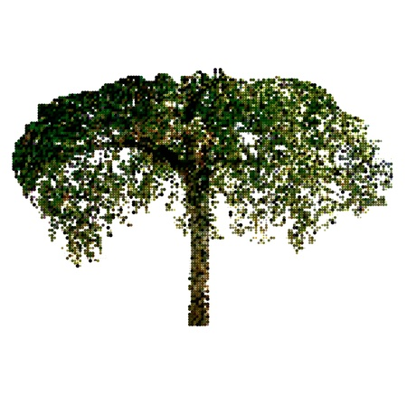sun shines through the branches of tree Stock Vector - 14255743