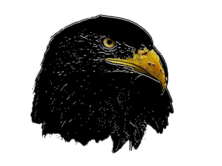 close up eyes: Graphical sketch of silhouette predator eagle