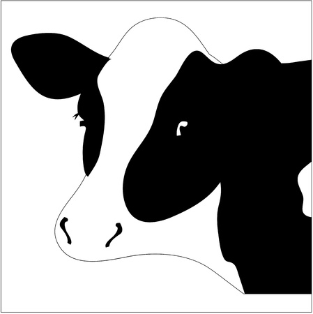Portrait big black and white cow   Illustration