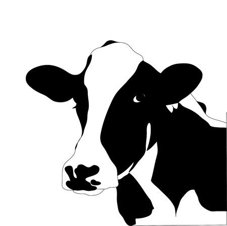 cow head: Portrait big black and white cow Illustration