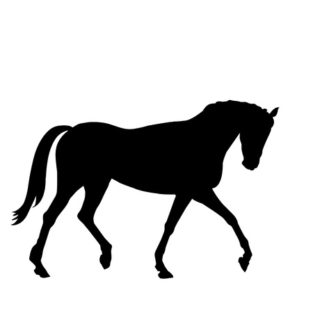 horse riding: beautiful black horse silhouette isolated on white background