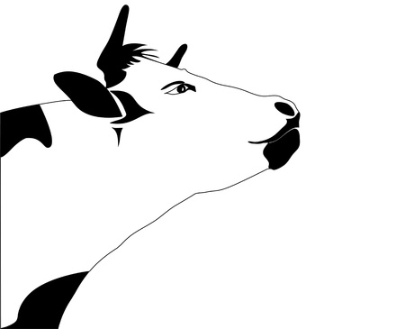 outline drawing: Portrait big black and white cow vector