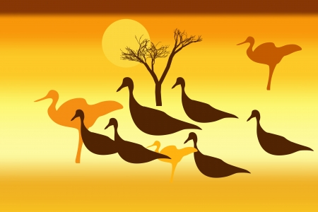 Silhouettes of wild birds at sunset  Vector