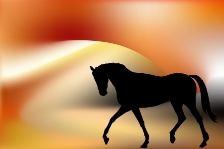 free riding: beautiful black horse silhouette isolated on Gold silk fire background