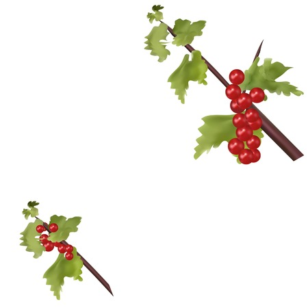 Red berries on green branch on postcard in Christmas Vector