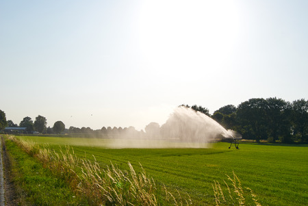 irrigated: Summer green meadow under the sun irrigated sprinkler system Stock Photo