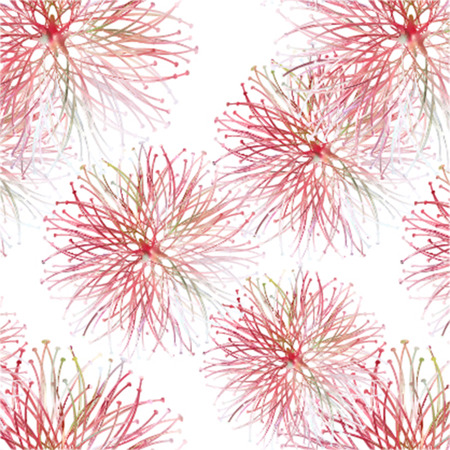 magic lily: spring greeting  red seamless pattern with mimosa licoris,  red magic lily Illustration