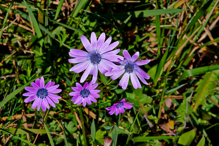 Gentle field pink and purple flowers in early spring in the green gentle field pink and purple flowers in early spring in the green grass stock photo mightylinksfo