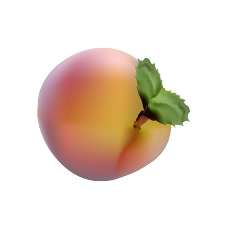 Photorealistic images of red fruit ripe peach with a stalk and leaves
