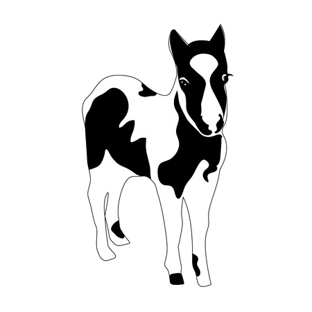 Black and white silhouette of a small horse, pony, foal  Vector