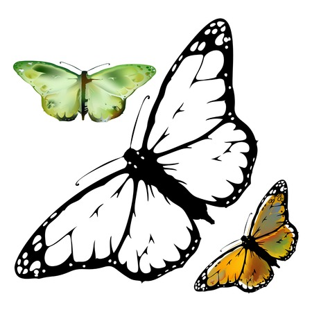 set Monarch Butterfly with open wings  top view Illustration