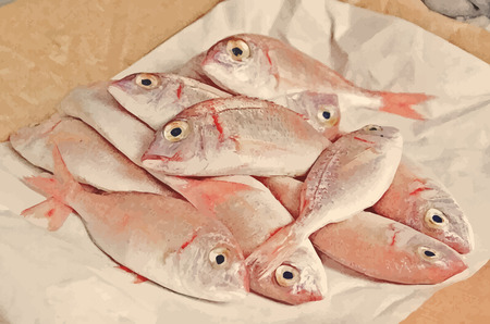 Fresh fish  with red scales Vector