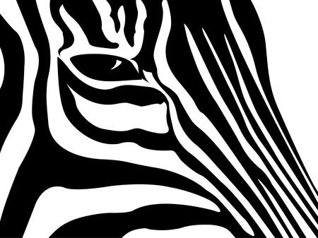 dobbin: schematic outline black and white Zebra