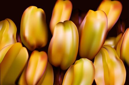 Carambola Thai exotic fruit in the form of a star with vitamin C. Averrhoa carambola. tree family Oxalis. Stock Vector - 43877852