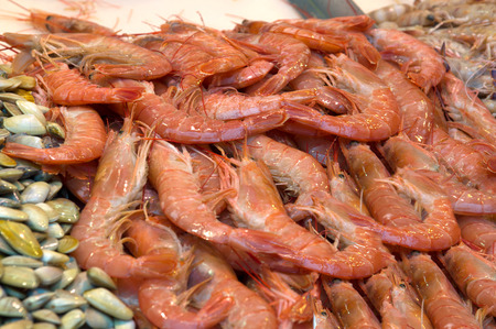 mediterranean countries: Huge shrimp on tables of the market of Mediterranean countries
