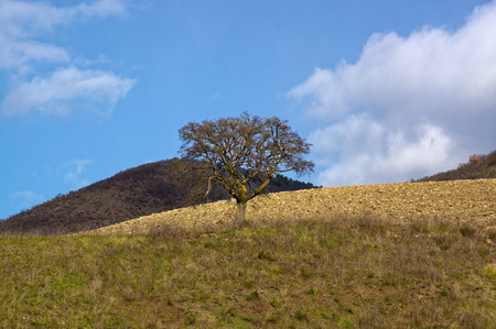 lonely tree: Lonely tree on the hills of Italy. Autumn landscape