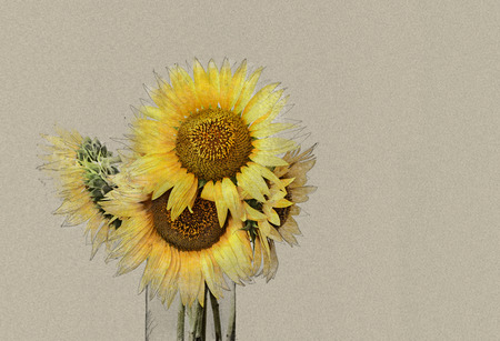 sun flowers: Bouquet of bright sunflowers in vase. The simulation of pencil drawings and watercolors