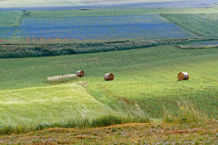 castelluccio di norcia: Hay rolled in bales in agricultural fields in Italy. Castelluccio di norcia.
