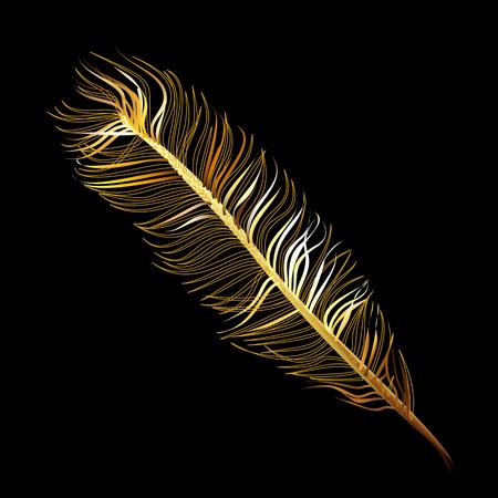fabulous: Golden Fabulous feather of magic bird on a black background Illustration