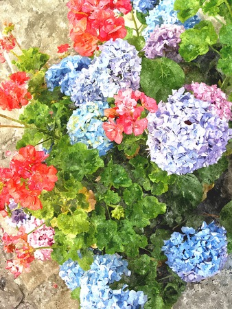 Home various flowers in pots. Design Italian courtyards around the house. The effect of oil paint. Stock Photo