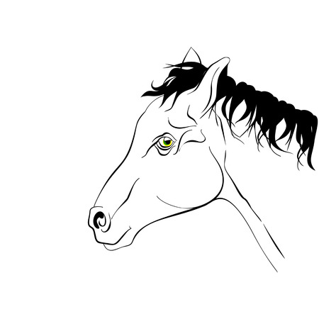 Horse head in profile. Elegant black and white silhouette horse with realistic green eyes. Illustration