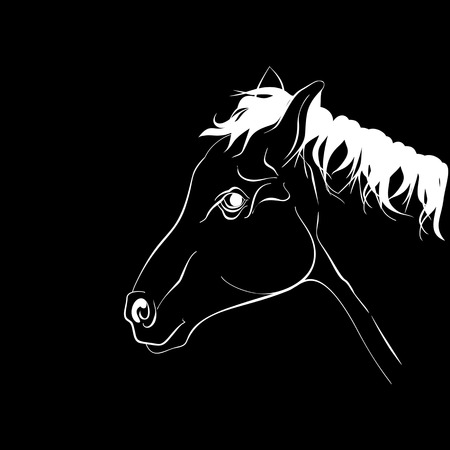 Horse head in profile. Elegant white horse silhouette on black background.