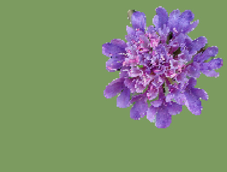 Spring field lilac flower closeup on grass. Art quilt and mozaic. Color harmony in needlework. The picture art on the wall. Illustration