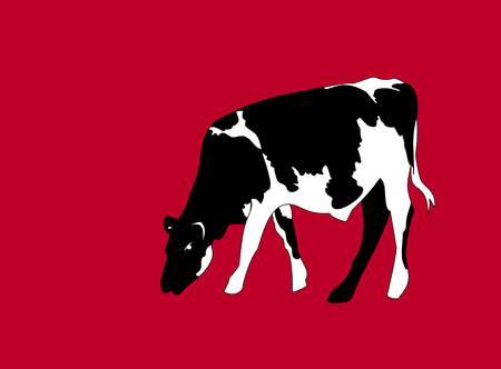 Portrait of a big black and white cow vector on red