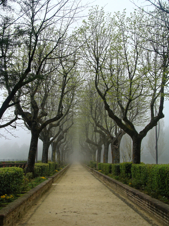 tribulation: Sorrow alley in autumn in the fog. Mysterious blur unfocus the image of trees without leaves. Gothic.