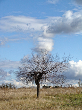 Lonely tree without leaves in late autumn in field. Infinite blue sky with clouds. Fantastic rural landscape. feeling of desolation Stock Photo