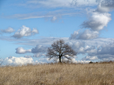aloneness: Lonely tree without leaves in late autumn in field. Infinite blue sky with clouds. Fantastic rural landscape. feeling of desolation Stock Photo